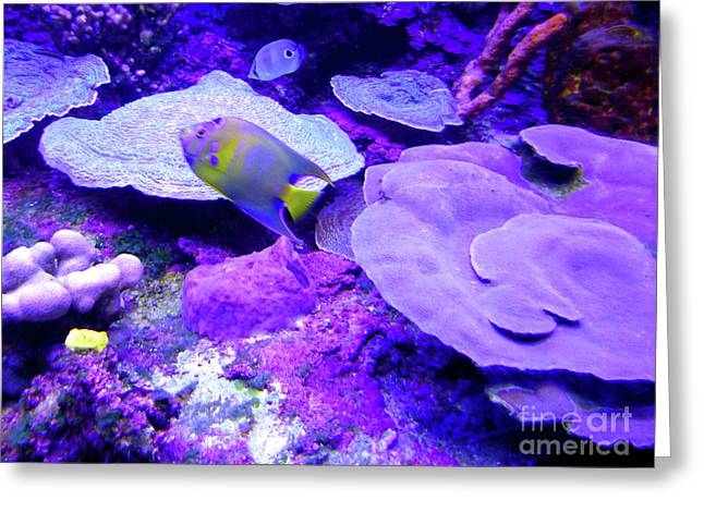 Greeting Card featuring the photograph Ta Purple Coral And Fish by Francesca Mackenney