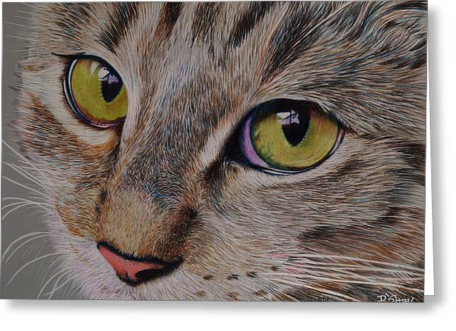Tabby Stare Greeting Card by Don MacCarthy
