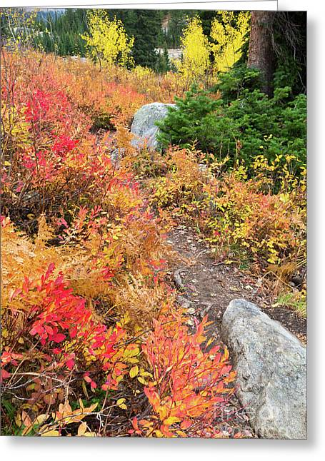 Table Mountain Trail In Fall Colors Greeting Card by Mike Cavaroc