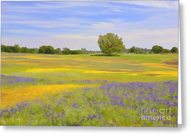 Table Mountain Wildflowers Greeting Card