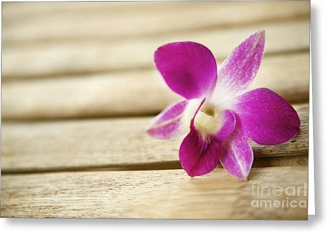 Tabletop Orchid Greeting Card