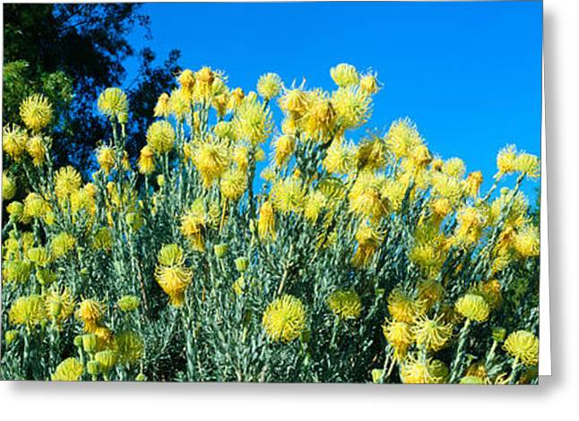 Taft Gardens In Spring, Ojai, California Greeting Card by Panoramic Images
