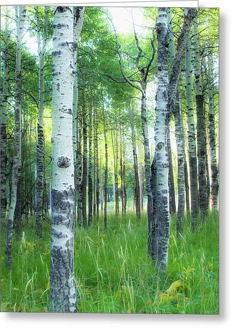 Tahoe Birch Greeting Card by Wes Jimerson