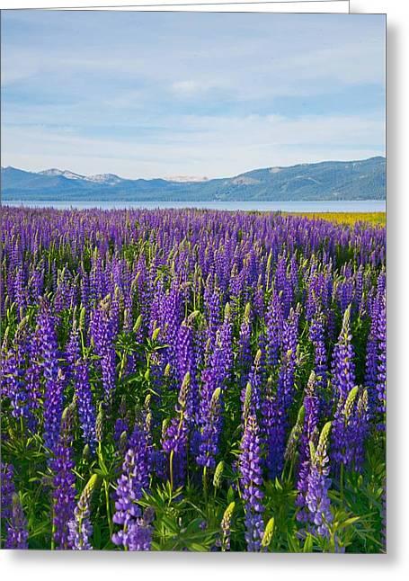 Tahoe In Summer Greeting Card