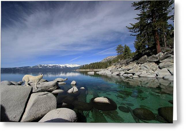 Greeting Card featuring the photograph Tahoe Wow by Sean Sarsfield