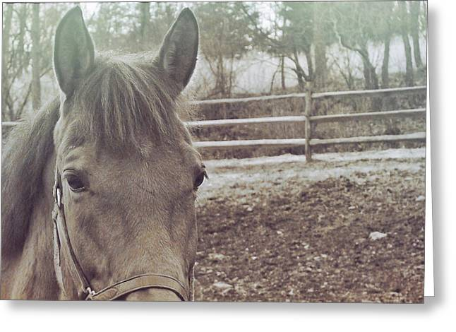 Greeting Card featuring the photograph Take A Chance by Dressage Design