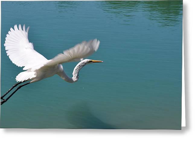 Takeoff Greeting Card by Teresa Blanton