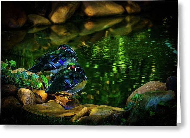 Taking A Break - Wood Ducks Greeting Card by TL Mair