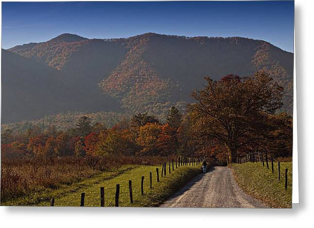 Taking A Walk Down Sparks Lane Greeting Card by Jonas Wingfield