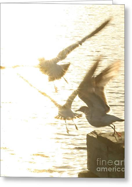 Taking Flight Greeting Card by Angie Bechanan