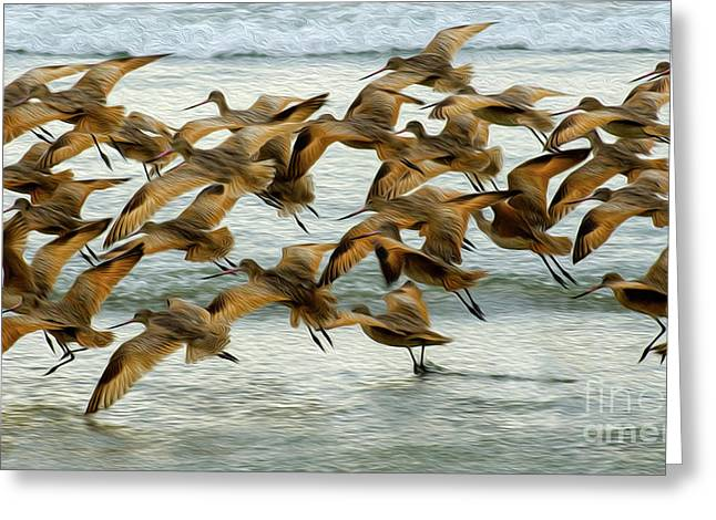 Taking Flight Greeting Card by Bob Christopher