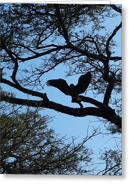 Taking Flight South Africa Greeting Card by Patrick Murphy