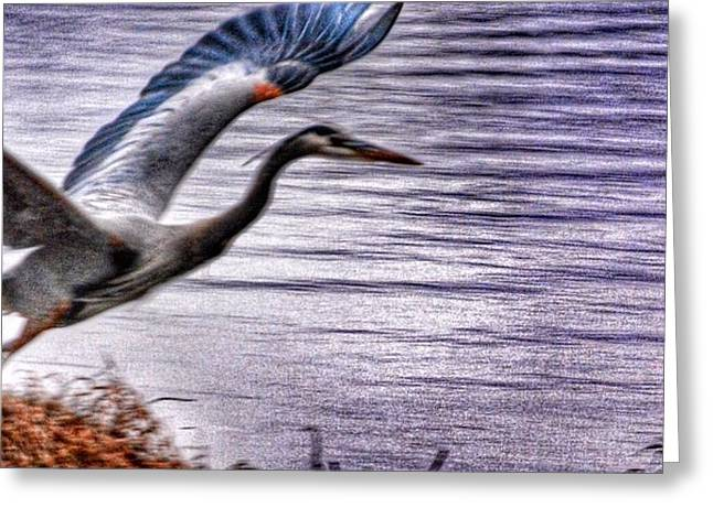 Taking Flight Greeting Card by Sumoflam Photography