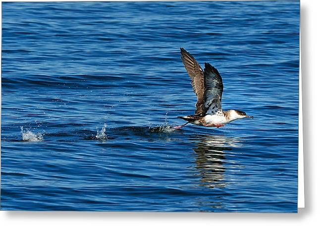 Taking Off Greeting Card by Tony Beck