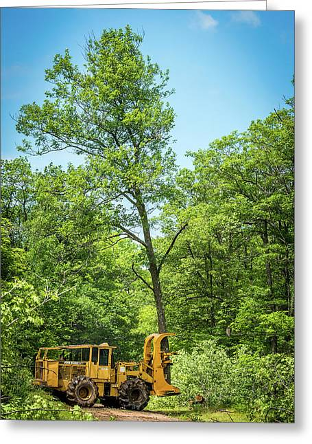 Taking One Of My Oak Trees For A Walk Greeting Card by Paul Freidlund