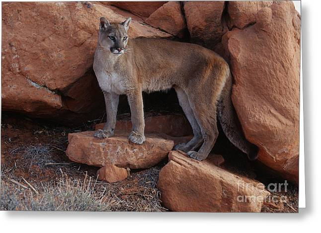 Taking Stock Greeting Card by Sandra Bronstein