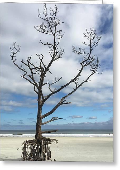 Talbot Stilt Tree #1 Greeting Card