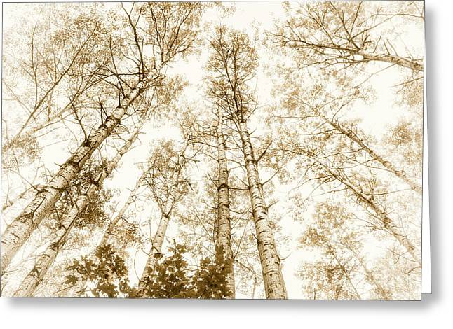 Greeting Card featuring the photograph Tall Aspens by Elena Elisseeva