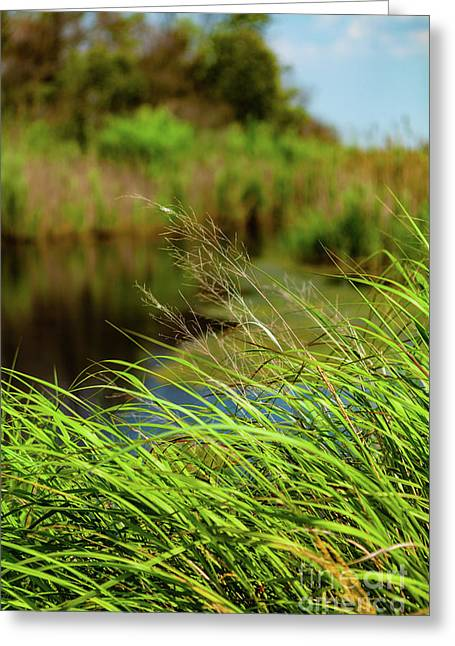 Tall Grass At Boat Dock Greeting Card