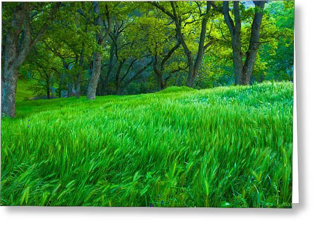 Tall Grass At Twilight Greeting Card