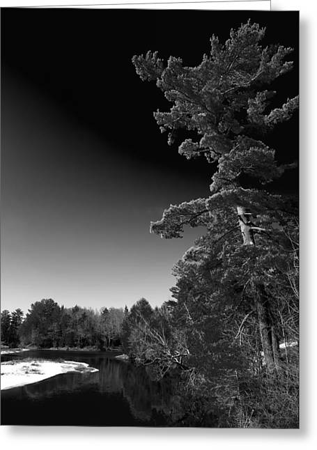 Tall Pine On The Moose Greeting Card by David Patterson