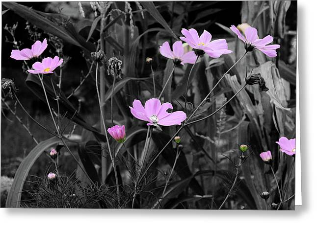 Tall Pink Poppies Greeting Card