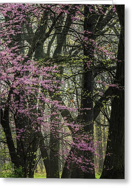 Tall Red Buds In Spring Greeting Card by Joni Eskridge
