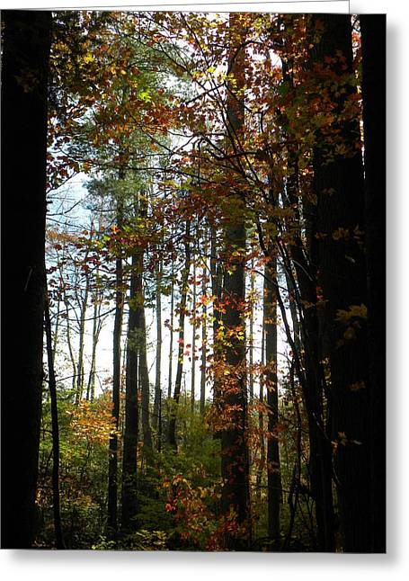 Tall Trees Greeting Card by Cindy Gacha