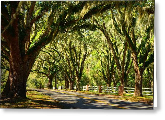Tallahassee Canopy Road Greeting Card