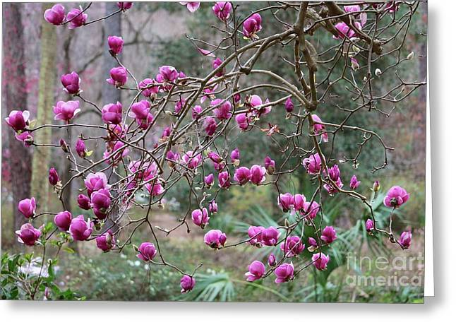 Tallahassee Treasures - Pink Magnolias Greeting Card by Carol Groenen