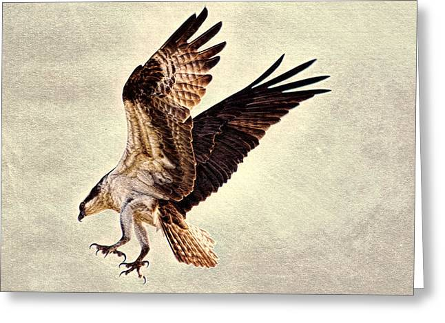 Greeting Card featuring the photograph Talons First  by Ola Allen
