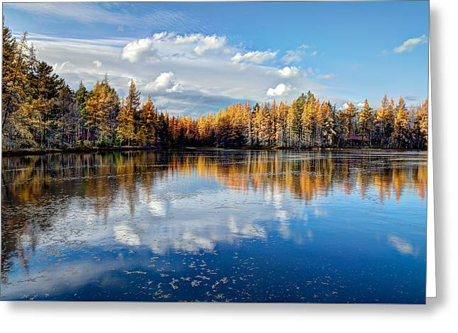 Tamarack Reflections Greeting Card by David Patterson