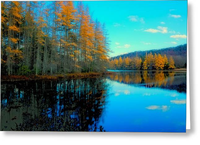Tamaracks In The Adirondacks Greeting Card by David Patterson
