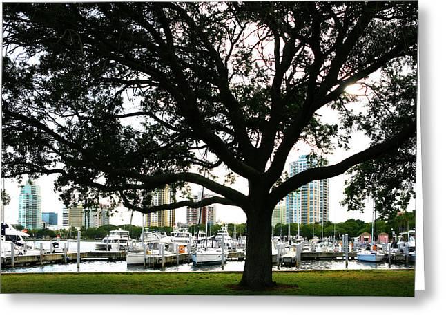 Tampa Shoreline And Skyline Through Tree Greeting Card