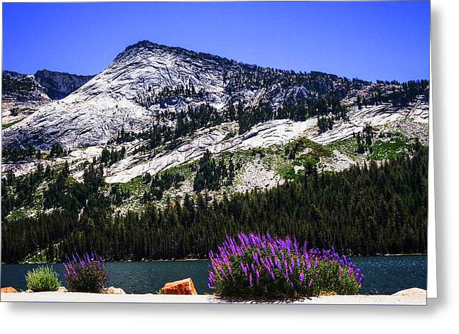Tanaya Lake Wildflowers Yosemite Greeting Card