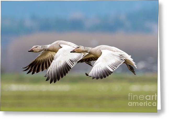Greeting Card featuring the photograph Tandem Glide by Mike Dawson