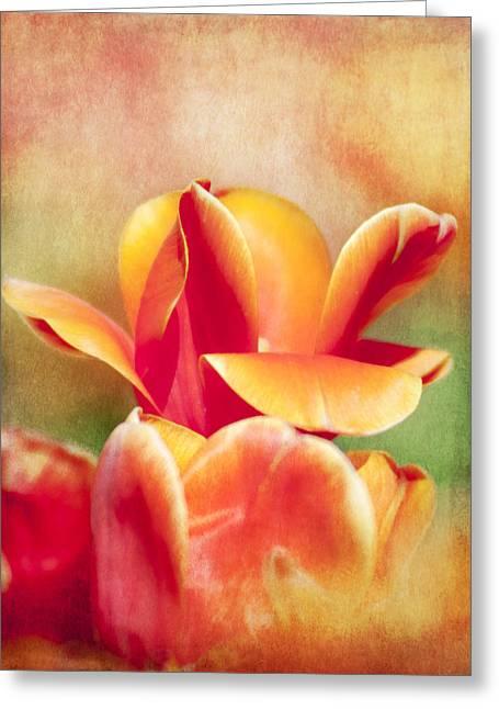 Tangerine Tulip Sorbet Greeting Card