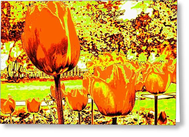 Tangerine Tulips Greeting Card by Will Borden