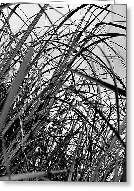 Greeting Card featuring the photograph Tangled Grass by Susan Capuano