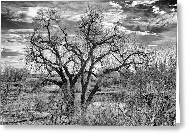 Tangled Old Tree On Platte River Greeting Card