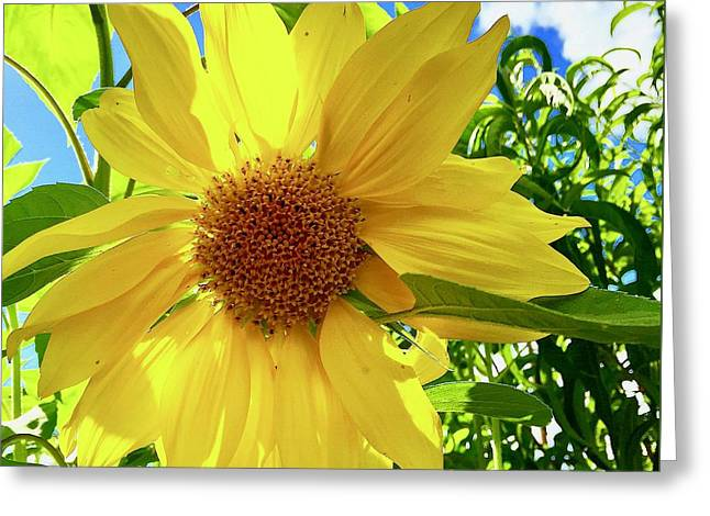 Tangled Sunflower Greeting Card
