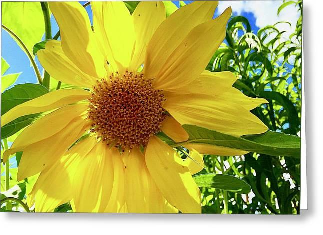 Tangled Sunflower Greeting Card