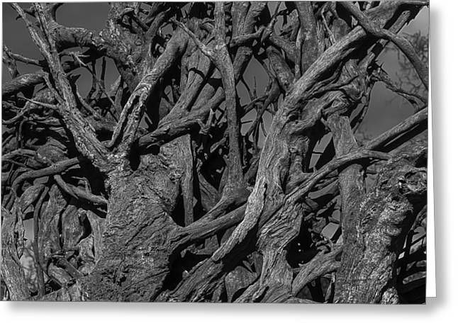 Tangled Tree Roots Greeting Card by Garry Gay