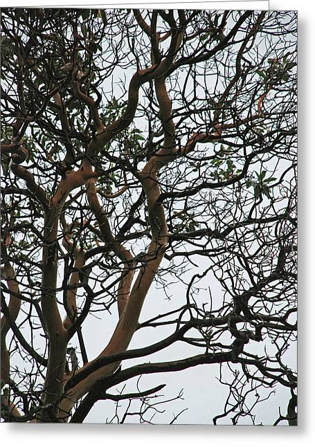 Tangled Web Tree Greeting Card by Carol  Eliassen