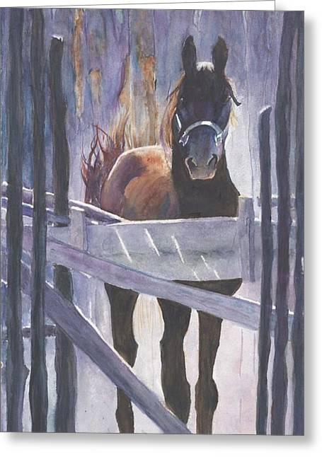 Taos Morgan Stallion Watercolour Greeting Card by CheyAnne Sexton