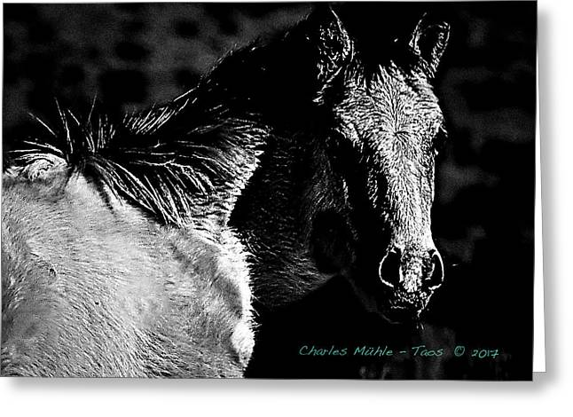 Taos Pony In B-w Greeting Card