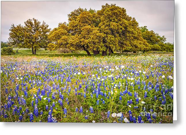 Tapestry Of Wildflowers At Willow City Loop - Texas Hill Country Greeting Card by Silvio Ligutti
