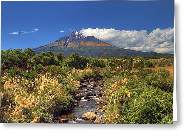 Taranaki Gold Greeting Card