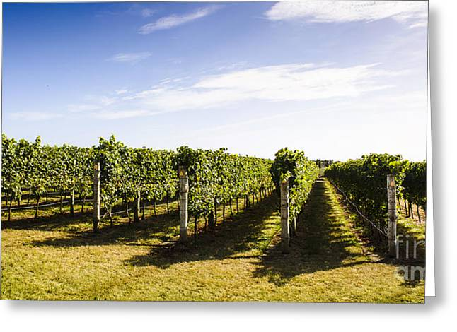 Tasmania Winery Landscape Greeting Card by Jorgo Photography - Wall Art Gallery
