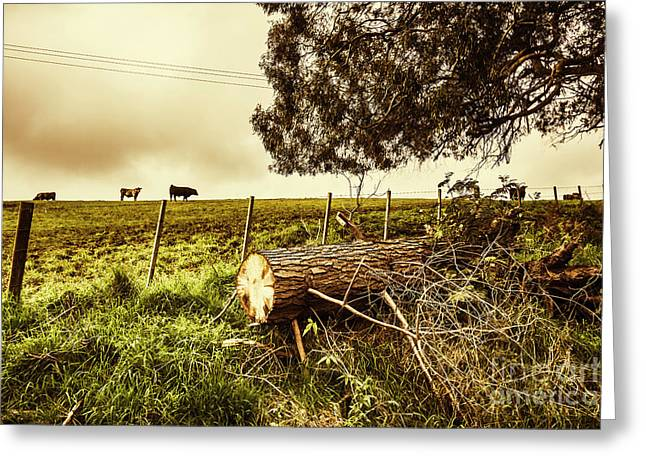 Tasmanian Country Farm Details Greeting Card by Jorgo Photography - Wall Art Gallery
